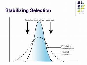 Disruptive Selection Ppt Darwin Vs Lamarck Powerpoint Presentation Id 691053