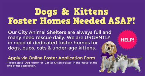 foster home network furry friends rescue dog cats