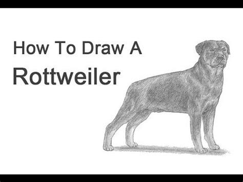 draw  dog rottweiler youtube