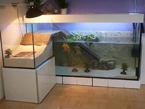Aquarium L Form : found this incredible turtle aquarium over at r turtle ~ Sanjose-hotels-ca.com Haus und Dekorationen