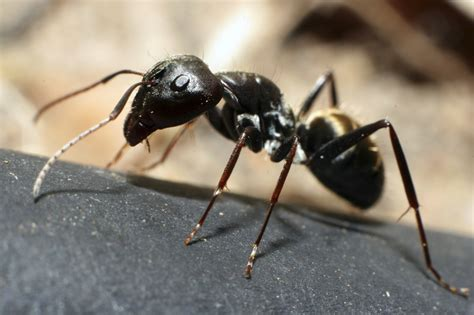 Information On Ants In Houses
