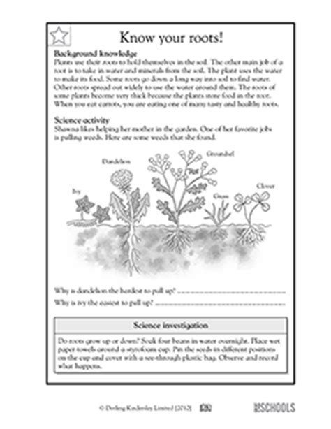 3rd grade 4th grade science worksheets your roots