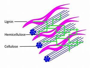 Nachwachsende Rohsstoffe - Chemische Bausteine aus der Natur