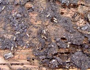 Produit Contre Les Termites : traitement des sols des arbres et des souches a hexaflumeron ~ Melissatoandfro.com Idées de Décoration