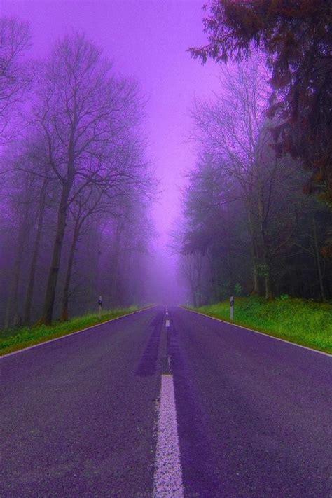 nature trees purple fog woods roads  wallpaper
