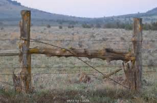 Old Wooden Fence Post