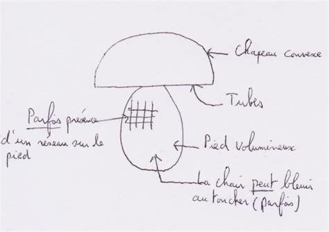 comment cuisiner les cepes reconnaître les cèpes ou les bolets