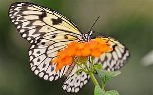Black White Butterfly wallpaper - 853703