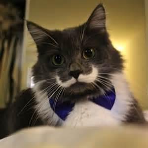 hamilton the cat hamilton the cat vk