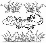 Gecko Coloring Lizard Cartoon Pages Fuinny Coloringpagesfortoddlers Animal Real sketch template