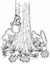 Maple Syrup Tree Coloring Activities Homemade Sugaring Drawing Sugar Tap Crafts Production Preschool Sap Tlc Sucre Cabane Colouring Printables Howstuffworks sketch template