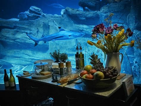 chambre aquarium airbnb l 39 aquarium de loue une chambre immergée
