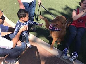 labradoodle therapy service dogs near las vegas nv 4e With therapy dog training las vegas