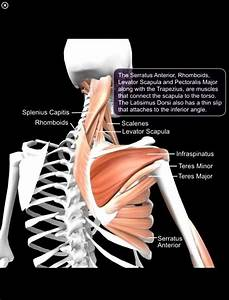 140 Best Physical Therapy Exercises Images On Pinterest