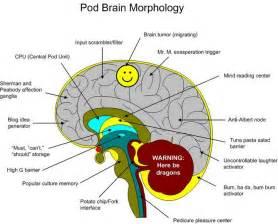 Brain Diagram Labeled