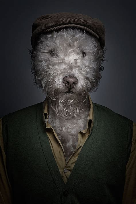 hilarious portraits  dogs dressed  human clothes