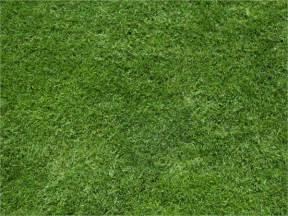 Grass Texture Pattern