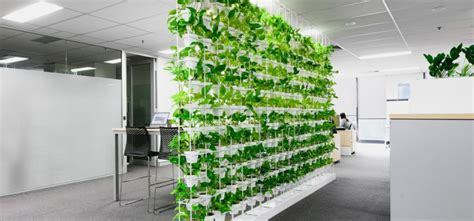 Ideas Green Walls by 6 Business Benefits Of Green Walls Ambius Australia