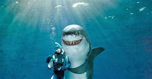 Funny Shark Attacks - Bing images
