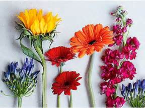 free delivery flowers flowers plants online free next day delivery m s