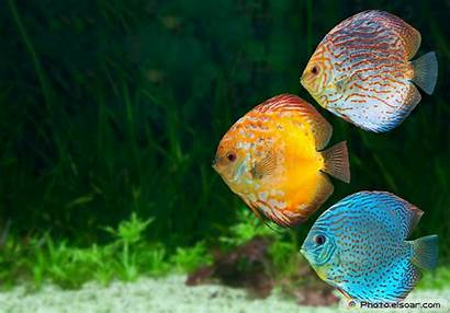 Wallpapers Fishes Tropical