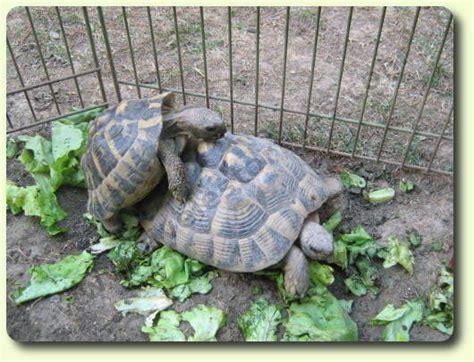 le pour tortue terrestre recherche tortue terrestre trouvez le meilleur prix sur voir avant d acheter
