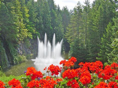 ross and geraniums butchart gardens b c brit