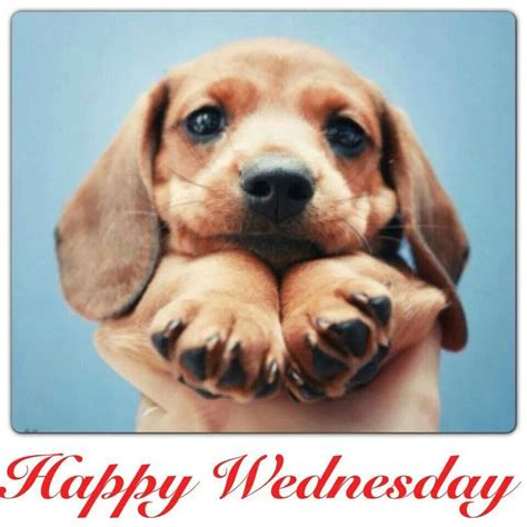 happy wednesday pictures   images  facebook