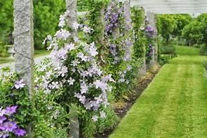Clematis Pflanzen Kübel : 10 robuste clematis sorten sch ne kletterpflanzen f r garten ~ Orissabook.com Haus und Dekorationen