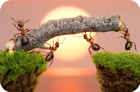 Ants, Agony And Answers (symbolic Lessons From Ants