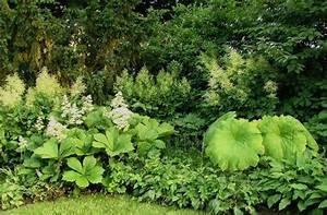 Pflanzen Für Schattengarten : staudengarten gross potrems gartenrundgang im juli schaublatt rodgersia aesculifolia und ~ Sanjose-hotels-ca.com Haus und Dekorationen