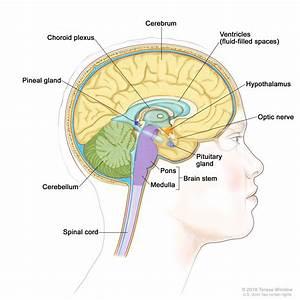 Brain Stem  Patient