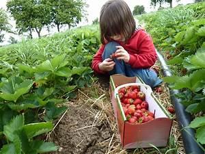äpfel Pflücken Berlin : erdbeeren selber pfl cken berliner beerengarten ~ Lizthompson.info Haus und Dekorationen