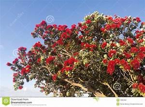 Baum Mit Roten Blättern : bl hender extravaganter baum mit roten blumen stockfotografie bild 7980402 ~ Eleganceandgraceweddings.com Haus und Dekorationen
