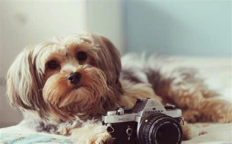 artificial intelligence    estimate  dog age