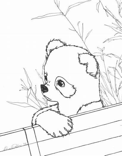 Panda Coloring Pages Printable Pandas Realistic Drawing