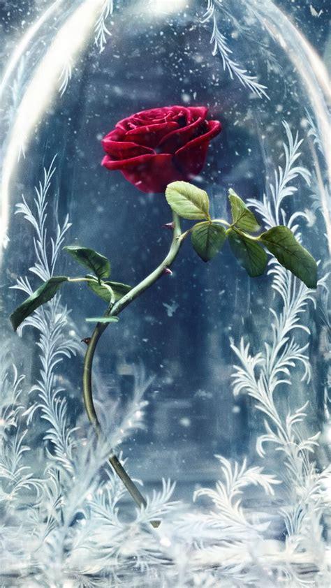 wallpaper beauty   beast glass rose  movies