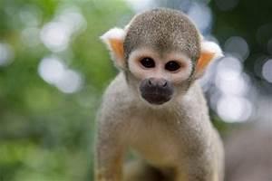 real jungle animals - Google Search | Jungle Fever ...