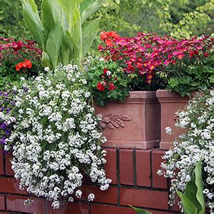 Balkonpflanzen Sehr Sonnig by Balkonpflanzen Balkonania