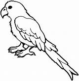 Parrot Coloring Bird Animals Macaw Drawing Animal Clipart sketch template