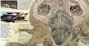 Actual Anatomy Of The Sarlacc Pit