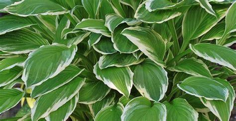 Schattenpflanzen Für Balkon by Schattenpflanzen 16 Pflanzen Fr Den Schatten In Ihrem Garten