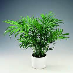 cat safe plants which plants are safe and not safe for cats