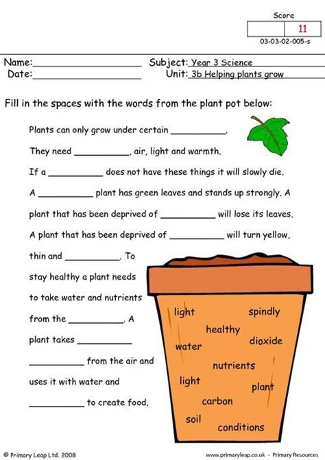 primaryleap co uk how do plants grow worksheet plants