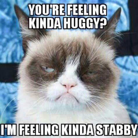 Grumpy Memes - 35 most funniest grumpy cat memes on the internet