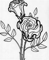Coloring Rose Blooming Flower Pages Flowers Kidsplaycolor Sheets Printable Bloomed Getdrawings Drawing sketch template