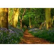 Pretty Forest Path Wallpaper  2000x1333 31453