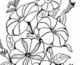 Svg Petunias Cocomelon Thegraphicsfairy sketch template