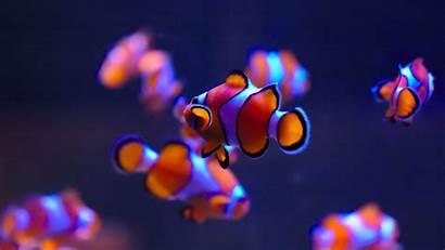 Fish Underwater Nemo Finding Ultra Clown Clownfish
