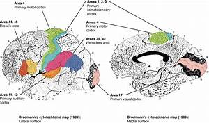 In This Figure  The Brodmann Areas  Identifying The